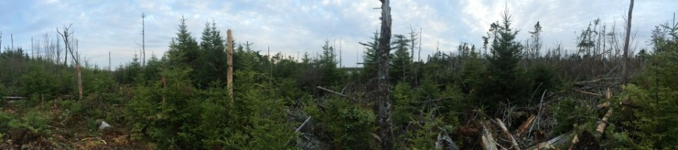 The off gird cabin build site BEFORE trail blazing 1