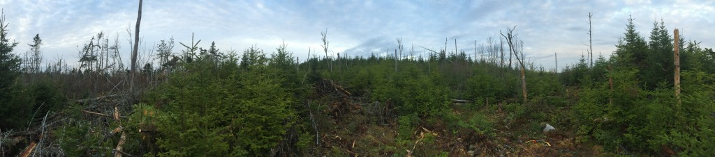 The off gird cabin build site BEFORE trail blazing 2