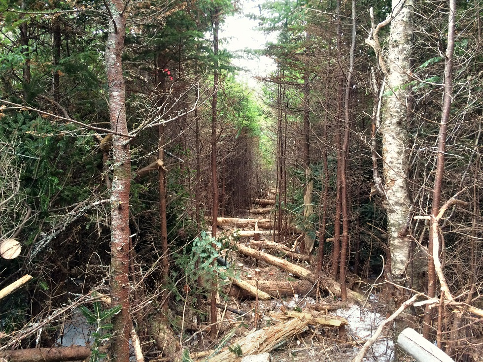 Trail-Blazing-Part-2