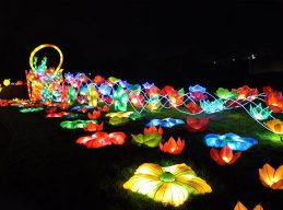 chinese-lanterns-festival