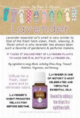 SUMMER2-Lavender_EventCards