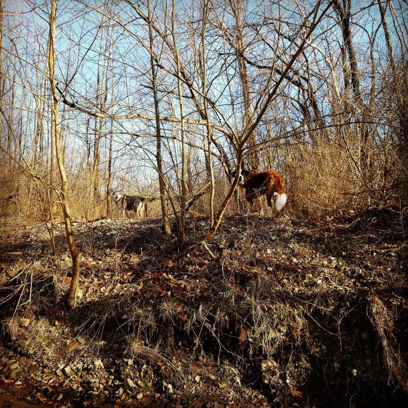 Grindstone Nature Area, Columbia MO
