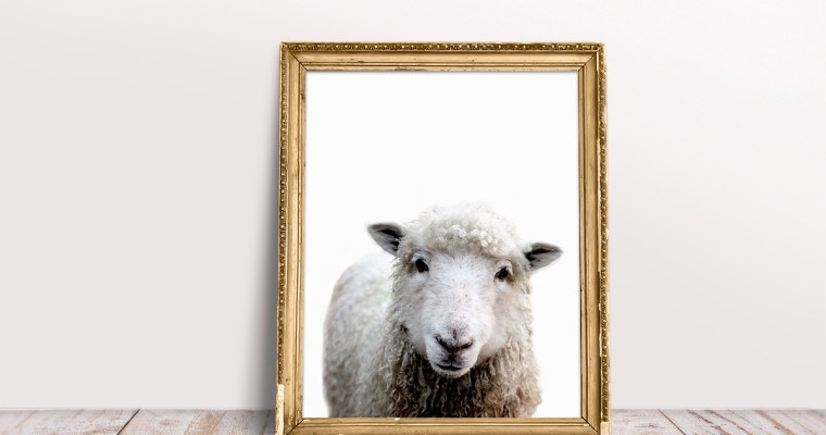 Little Lamb Wall Art