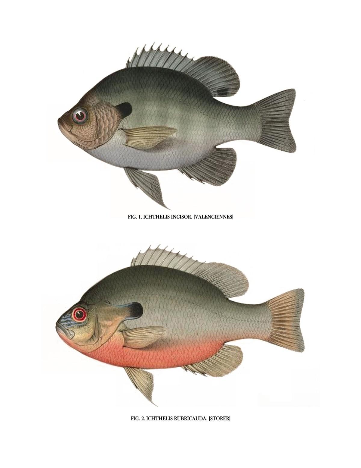 Vintage Fish Wall Art - Set of 4Vintage Fish Wall Art - Set of 4