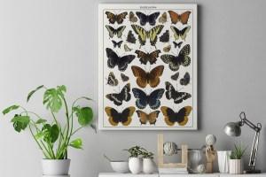 Butterfly Specimen Wall Art