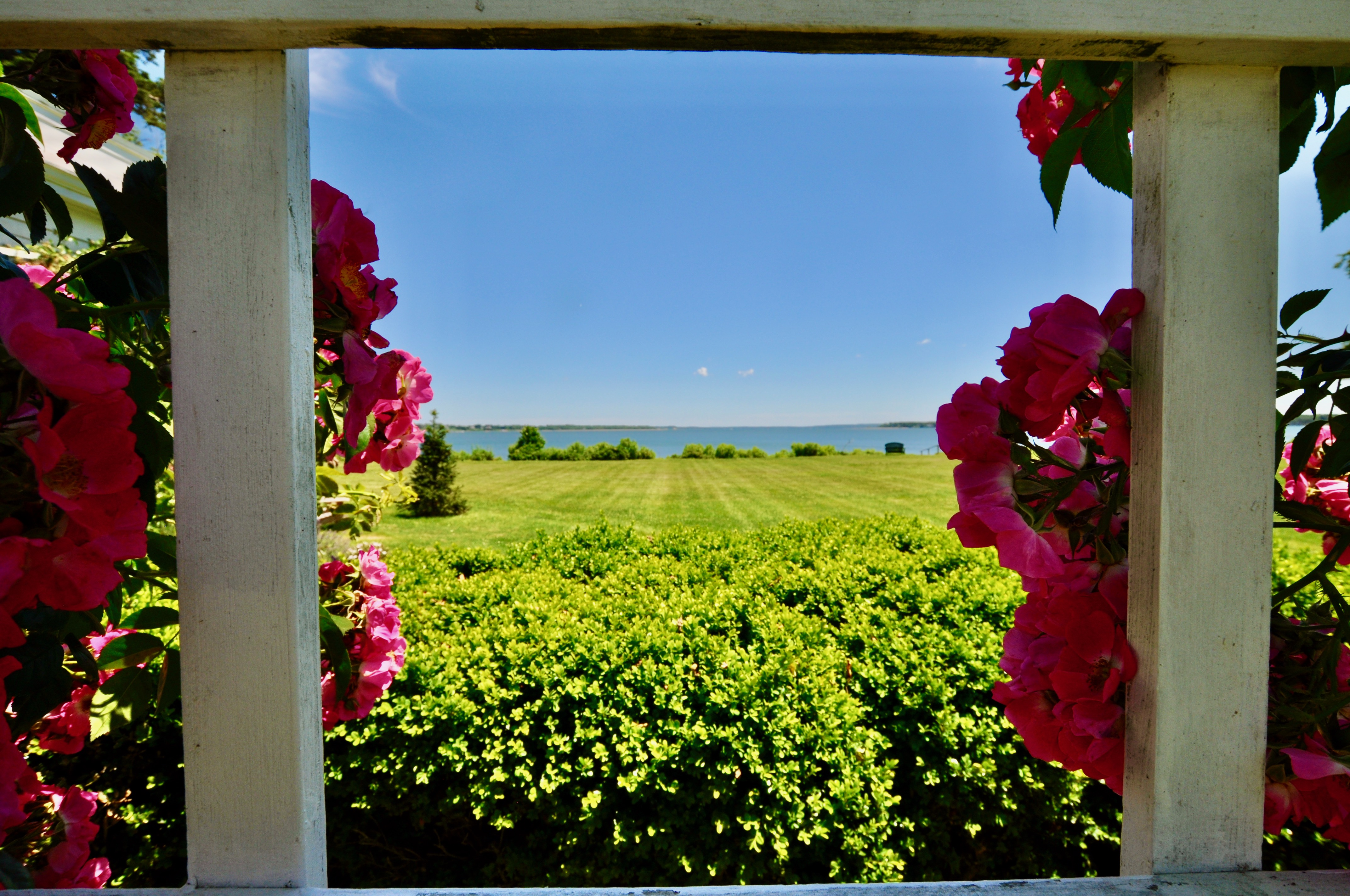 Looking through the rose trellis to the water