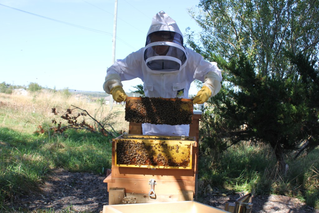 Checking a bee hive