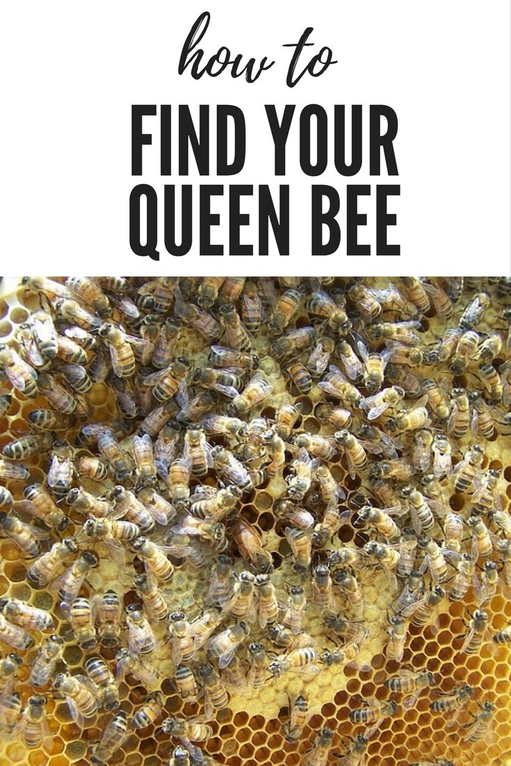 How to find the Queen bee OR Where\'s Waldo?