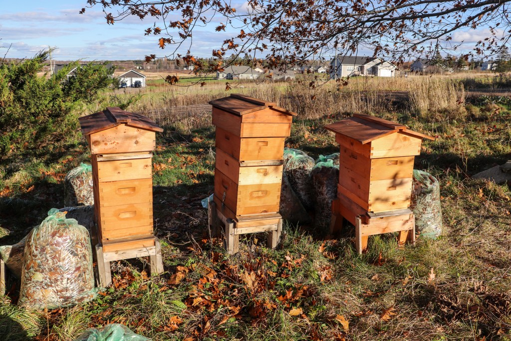 Three beehives and bags of leaves