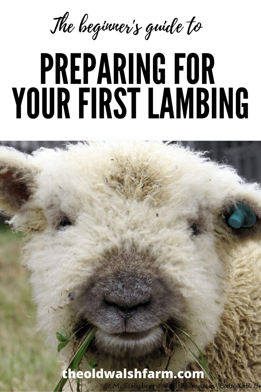 The beginner\'s guide to preparing for your first lambing