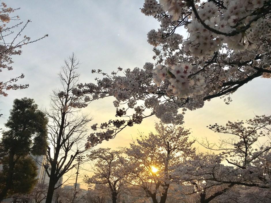 Sakura Kinshicho Park