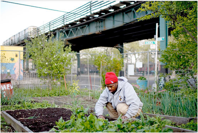 Man harvesting food from an allotment in a city beneath a railway bridge