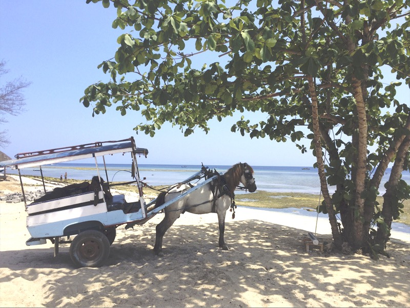 Horse taxi at Gili Meno
