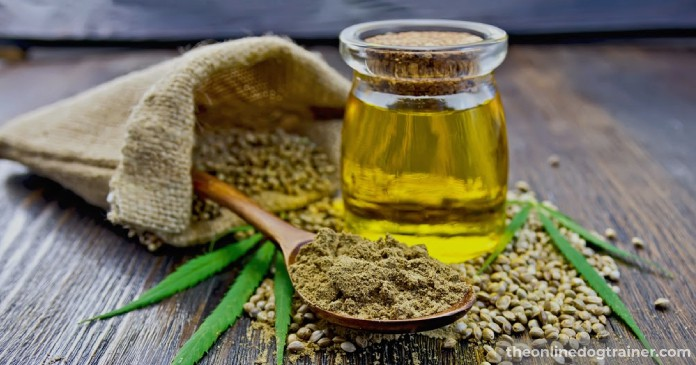5 Benefits CBD Oil May Provide to Senior Dogs BLOG IMAGES 1