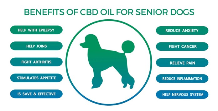 5 Benefits CBD Oil May Provide to Senior Dogs BLOG IMAGES 7