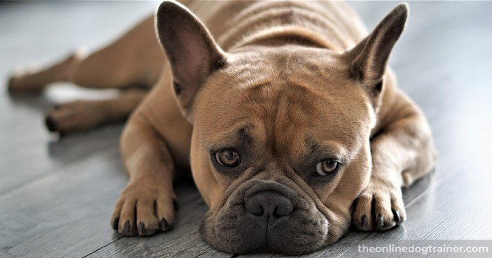 Doggy-Dans-Training-Tips-How-to-Potty-Train-an-Adult-Dog-BLOG-IMAGES-2