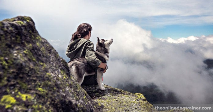 A-Tribute-to-10-Incredible-Canine-Companions-FEATURED-IMAGE