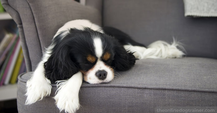 Doggy-Dans-7-Step-System-for-Keeping-Your-Dog-Off-the-Furniture-FEATURED-IMAGE