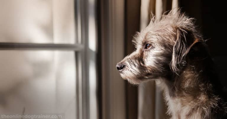 Rescue-Dog-Series-Part-3---5-Steps-to-Successfully-Acclimate-A-Rescue-Dog-Into-Your-Home--FEATURED-IMAGE