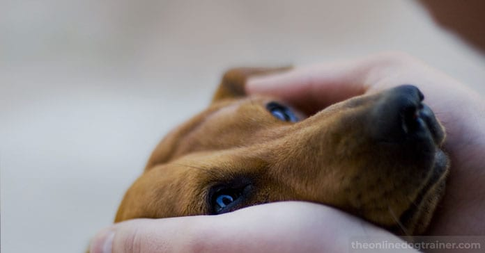 Rescue-Dog-Series-Part-4-5-Methods-for-Helping-Your-Rescue-Dog-Overcome-Anxiety-FEATURED-IMAGE