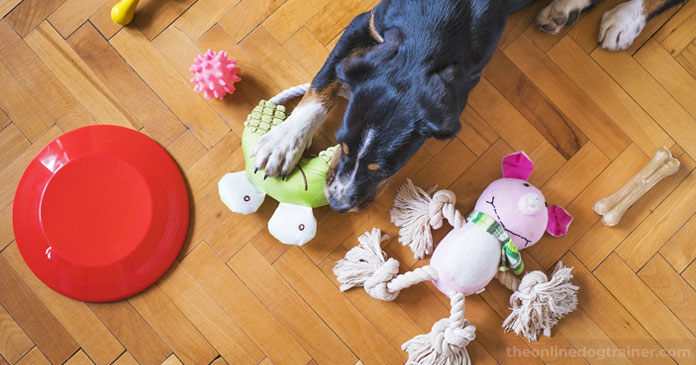 5-Ways-You-Can-Give-Back-to-Your-Local-Dog-Rescue-This-Holiday-Season-BLOG-IMAGES-3