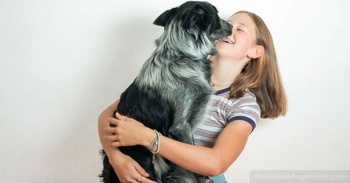 5-Ways-You-Can-Give-Back-to-Your-Local-Dog-Rescue-This-Holiday-Season-BLOG-IMAGES-5