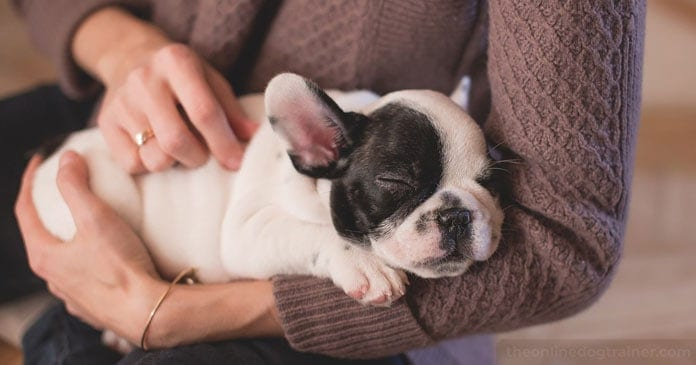 Christmas-Puppies-Are-You-Truly-Ready-For-The-Responsibility-of-a-Dog-BLOG-IMAGES-1