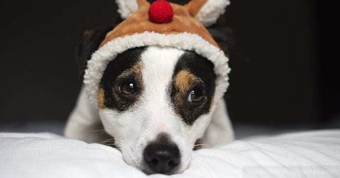 Christmas-Puppies-Are-You-Truly-Ready-For-The-Responsibility-of-a-Dog-BLOG-IMAGES-5