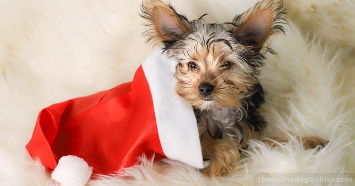 Christmas-Puppies-Are-You-Truly-Ready-For-The-Responsibility-of-a-Dog-BLOG-IMAGES-6