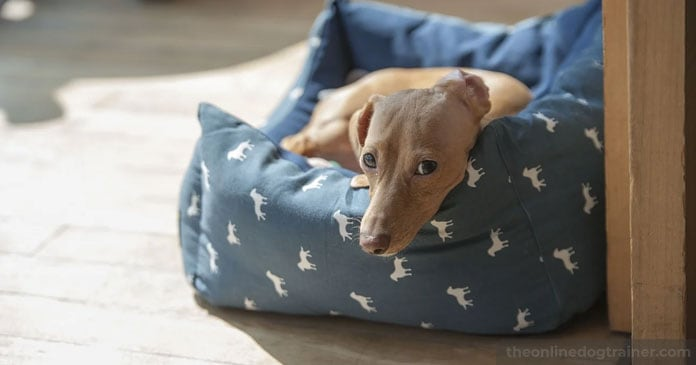 Doggy-Dans-7-Step-System-for-Keeping-Your-Dog-Off-the-Furniture-BLOG-IMAGES-3