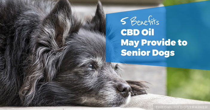 5-Benefits-CBD-Oil-May-Provide-to-Senior-Dogs-HEADLINE