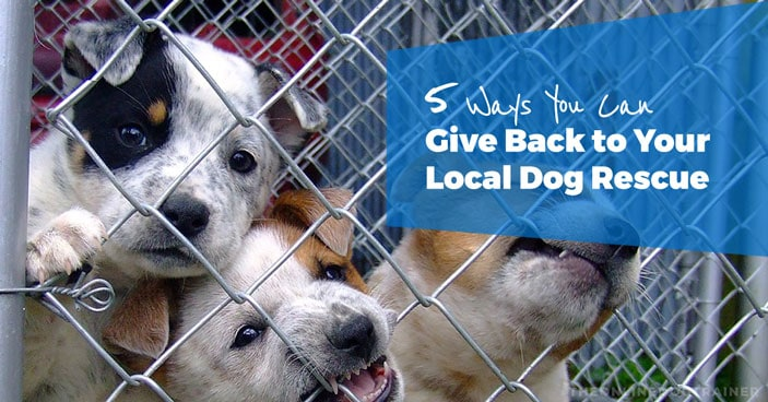 5-Ways-to-give-back-to-local-dog-rescue-HEADLINE-IMAGE