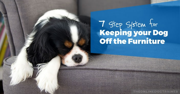 7-Step-System-for-Keeping-Your-Dog-Off-the-Furniture-HEADLINE-IMAGE