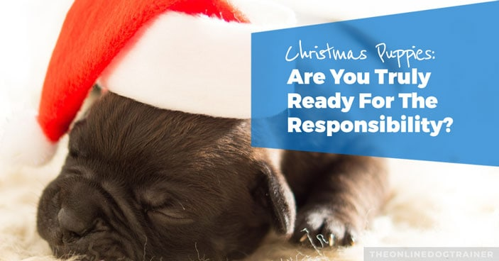 Christmas-Puppies-Are-You-Truly-Ready-for-the-Responsibility-of-a-Dog-HEADLINE-IMAGE