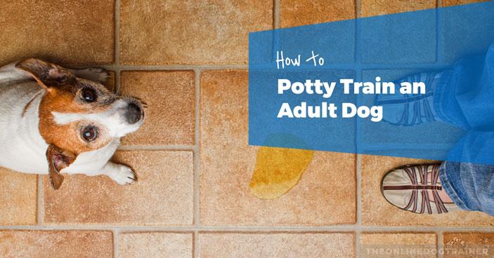 Doggy-Dans-Training-Tips-How-to-Potty-Train-an-Adult-Dog-HEADLINE-IMAGE