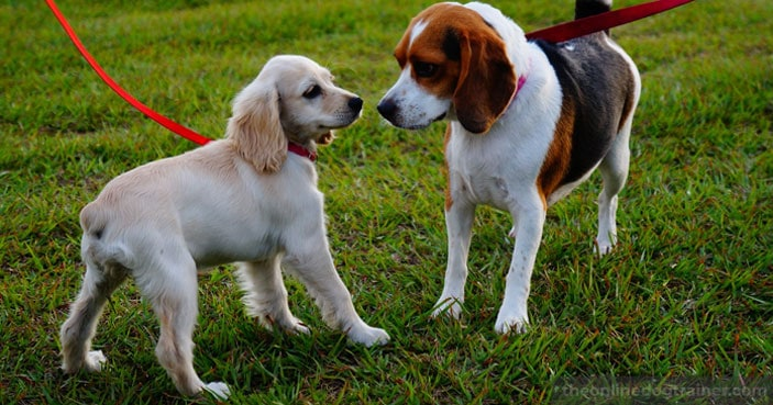 How-to-Safely-Socialize-Your-Dog-with-Other-Household-Pets-BLOG-IMAGES-3