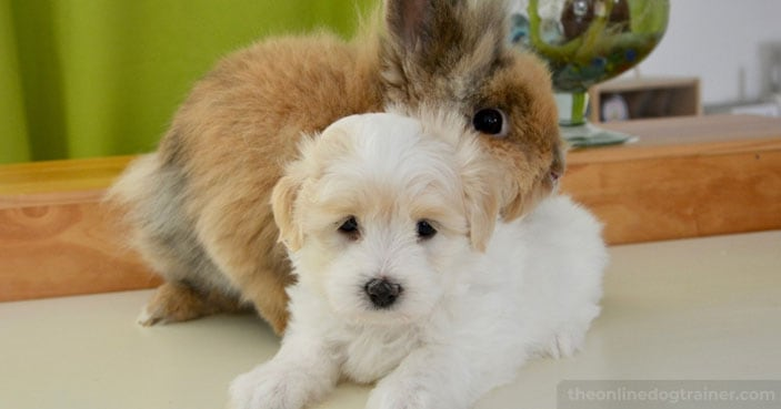How-to-Safely-Socialize-Your-Dog-with-Other-Household-Pets-BLOG-IMAGES-5
