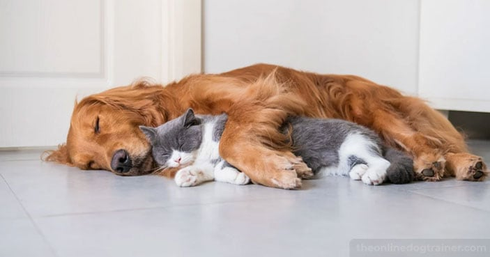 How-to-Safely-Socialize-Your-Dog-with-Other-Household-Pets-FEATURED-IMAGE