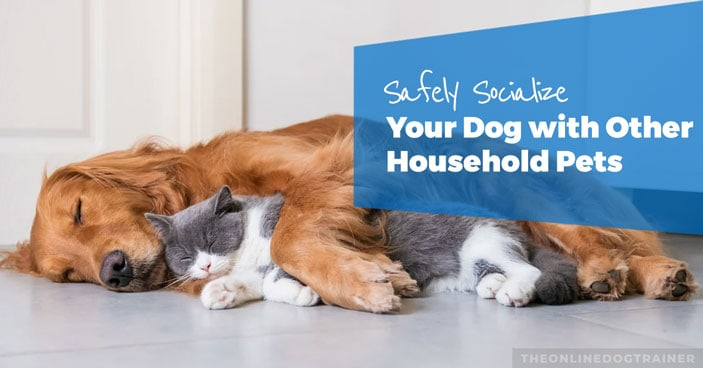 How-to-Safely-Socialize-Your-Dog-with-Other-Household-Pets-HEADLINE-IMAGE