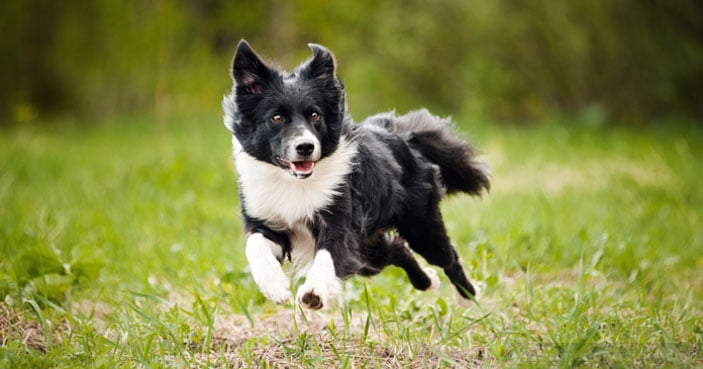 Dog-Training-Education-Month-How-to-Settle-a-Dog-Whos-Always-Busy-BLOG-IMAGES-1