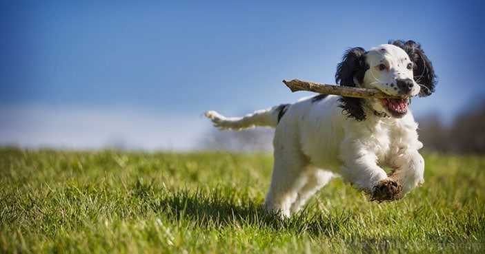 Dog-Training-Education-Month-How-to-Settle-a-Dog-Whos-Always-Busy-BLOG-IMAGES-2