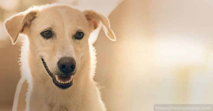 Dog-Training-Education-Month-How-to-Settle-a-Dog-Whos-Always-Busy-FEATURED-IMAGE-