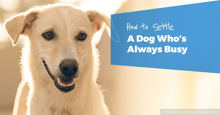 Dog-Training-Education-Month-How-to-Settle-a-Dog-Whos-Always-Busy-FEATURED-IMAGE