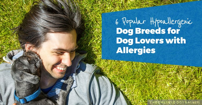 6-Popular-Hypoallergenic-Dog-Breeds-for-Dog-Lovers-with-Allergies-HEADLINE-IMAGE