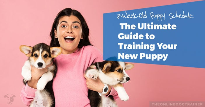 8-week-old-puppy-schedule-ultimate-guide-to-puppy-training-HEADLINE-IMAGE