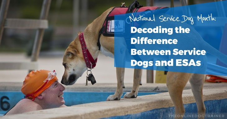 National-Service-Dog-Month-Decoding-the-Difference-Between-Service-Dogs-and-ESAs-HEADLINE-IMAGE
