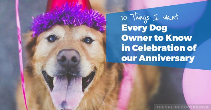10-Things-I-Want-Every-Dog-Owner-to-Know-in-Celebration-of-our-Anniversary-HEADLINE-IMAGE