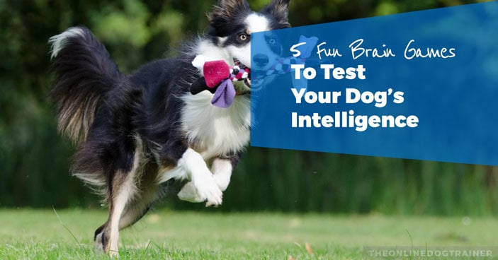 5-Fun-Brain-Games-To-Test-Your-Dogs-Intelligence-HEADLINE-IMAGE