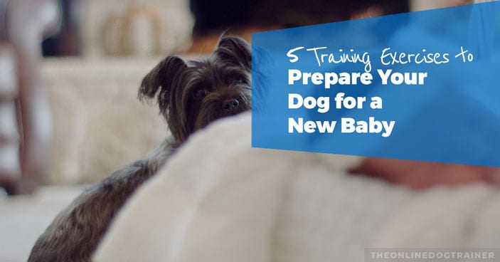 5-Training-Exercises-to-prepare-your-dog-for-a-new-baby-HEADLINE