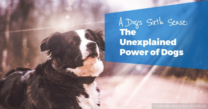 A-Dogs-Sixth-Sense-The-Unexplained-Power-of-Dogs-HEADLINE